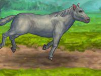 Pferde Pflegen